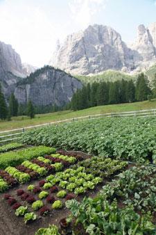 Montagne : fleurir le jardin et cultiver des légumes
