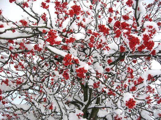 Couleurs d'hiver (Scènes d'hiver)