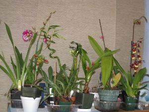 Quelques orchidées : le début d'une collection ?