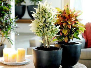 Une plante qui se plaît bien en pot
