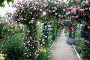 Le Jardin de Morailles