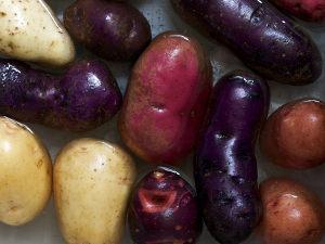 Pommes de terre : panorama des variétés