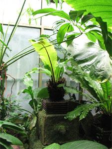 Plantes exotiques en véranda