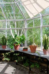 Pots de fleurs profitant de la lumière de la veranda