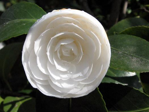 La fleur imbriquée