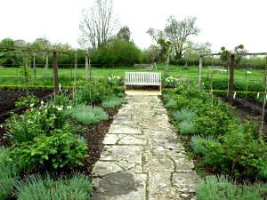 Bordures buis tout for Allee de jardin potager