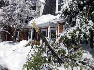 Une branche cassée par le poids de la neige