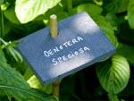 Etiquettes de jardin