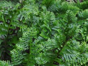 Des plantes de fraîcheur à Saint-Jean de Beauregard