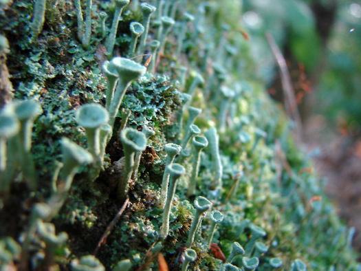 Forêt de lichens (Zoom sur le jardin)