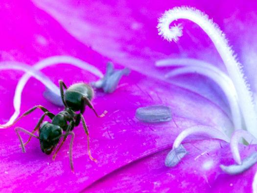 Le ballet des fourmis  (Zoom sur le jardin)