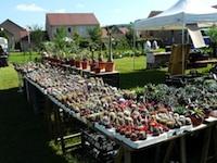 Foire aux plantes rares et au jardinage bio - Marmagne - Mai 2013