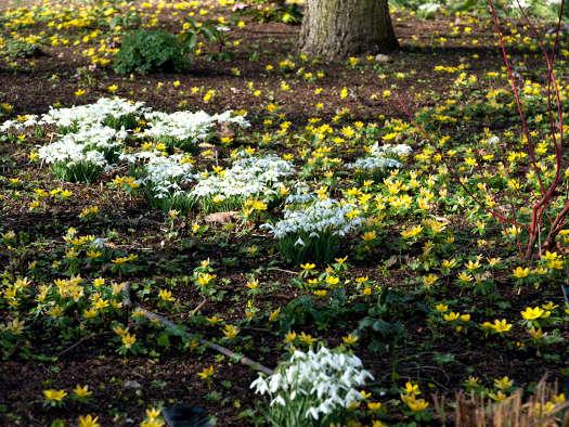 Premiers signes (Bulbes du printemps: les plus belles associations)