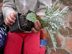 Dépotage des plantes