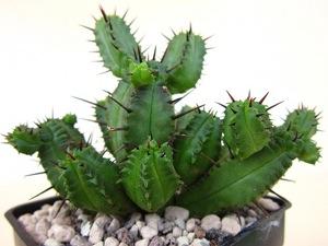 Les cactus et les plantes succulentes ou plantes grasses