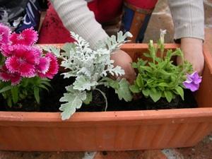 Installation des plantes : fin