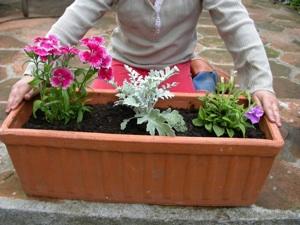Jardinière fleurie pour la terrasse