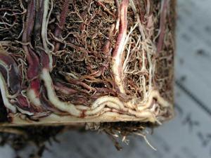Examinez bien les racines