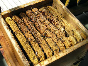 L'intérieur d'une ruche Warré