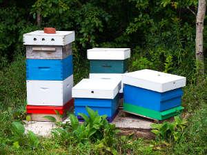 Des ruches dans le jardin