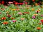 Fleurir rapidement son jardin au printemps
