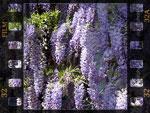 Diaporamas jardin et nature - p.3