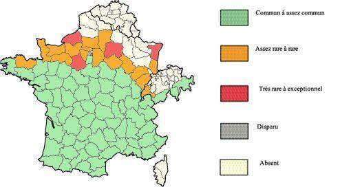 Lézard vert en France : aire de répartition