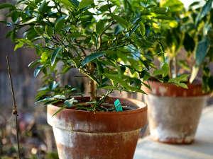 Plantes vertes : les sortir dans le jardin pour lété; nos conseils
