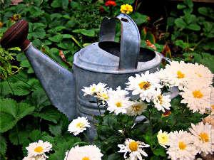 Brocante : objets anciens pour le jardin