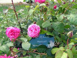 'Line Renaud'