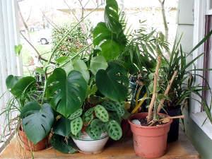 plantes vertes les sortir dans le jardin pour l 39 t nos