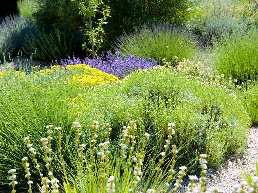 Les senteurs de la garrigue (Jardins secs)