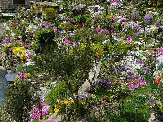 Rocailles et terrasses alpines jardins secs for Au jardin info plantes