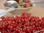 Fruits : que faire d'une récolte trop abondante ?