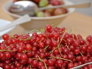 Récolte de Fruits : Conserves, Coulis et Congélation