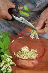 Découpe des fleurs de sureau