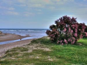 Jardin de bord de mer littoral m diterran e - Haie de bord de mer ...