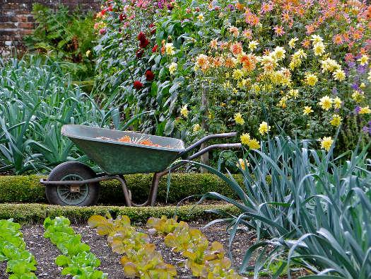 Coté jardin 00-potager-brouette-dahlias