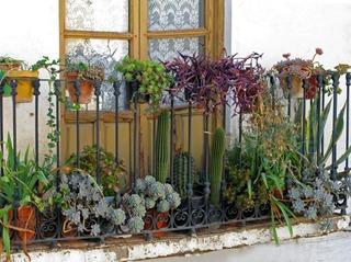Cactées en pot sur un balcon