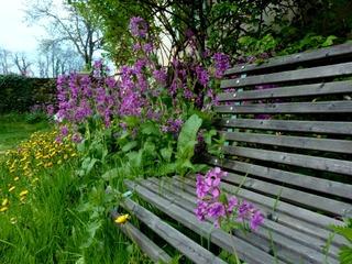 Lunaire - Fleurs