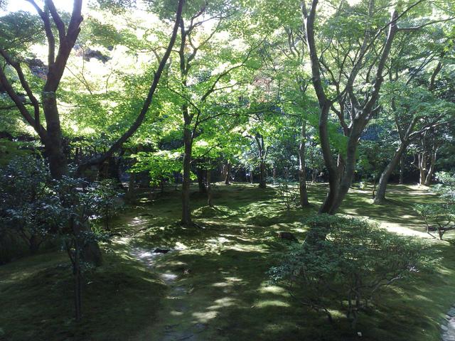 Terrasse bois sous arbre - Terrasse jardin immo aulnay sous bois ...