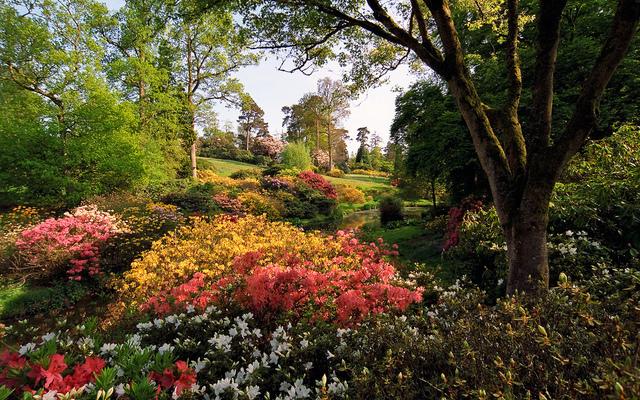 Jardiner sous un arbre ou en sous bois for Beaux arbres de jardin