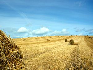 La paille est un produit de l'agriculture