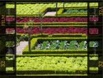 Diaporamas jardin et nature - p.4