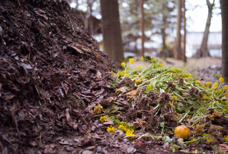 Compostage de feuilles mortes