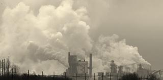 Des plantes qui résistent à la pollution urbaine