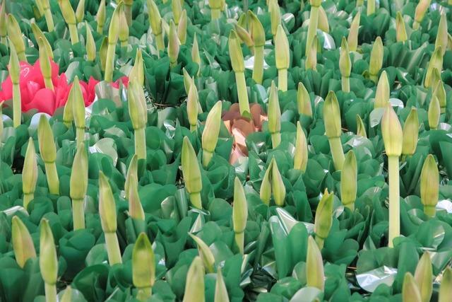 Comment bien choisir une plante en jardinerie for Amaryllis ne fleurit pas