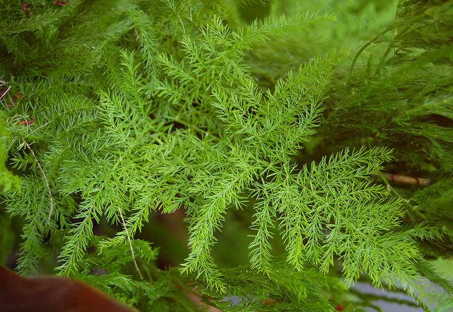 plante verte vaporeuse