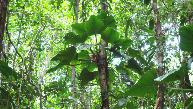 Plantes epiphytes - Plante vivant sans terre ...