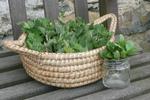Plantes sauvages comestibles : cueillette d'automne